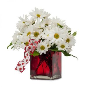 A Bouquet of White Gerberas